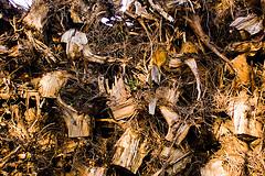 Lopultakin myönnetään edes varovasti, ettei kantojen kerääminen metsästä ole kovin järkevää